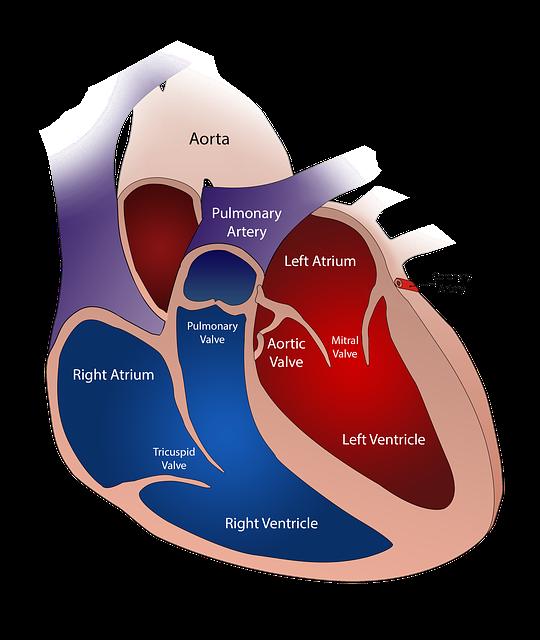 heart-2222964_640 pixabay
